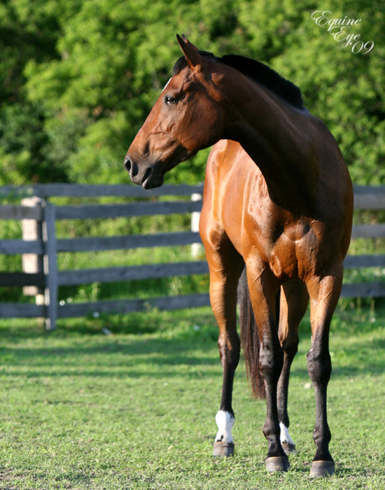 equine colic Equine colic occurs worldwide, although there are regional differences in the types of colic (for example, enterolithiasis), and is a common and important disease of horses.