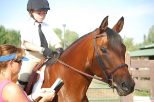 Sakura - Equine Colic Awareness Spokes-Horse Contest