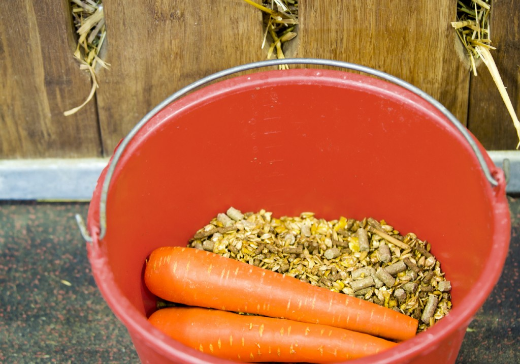 Horse Feed and Carrots