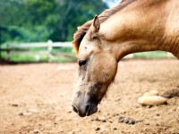 Know Your Horse's Colic Risk